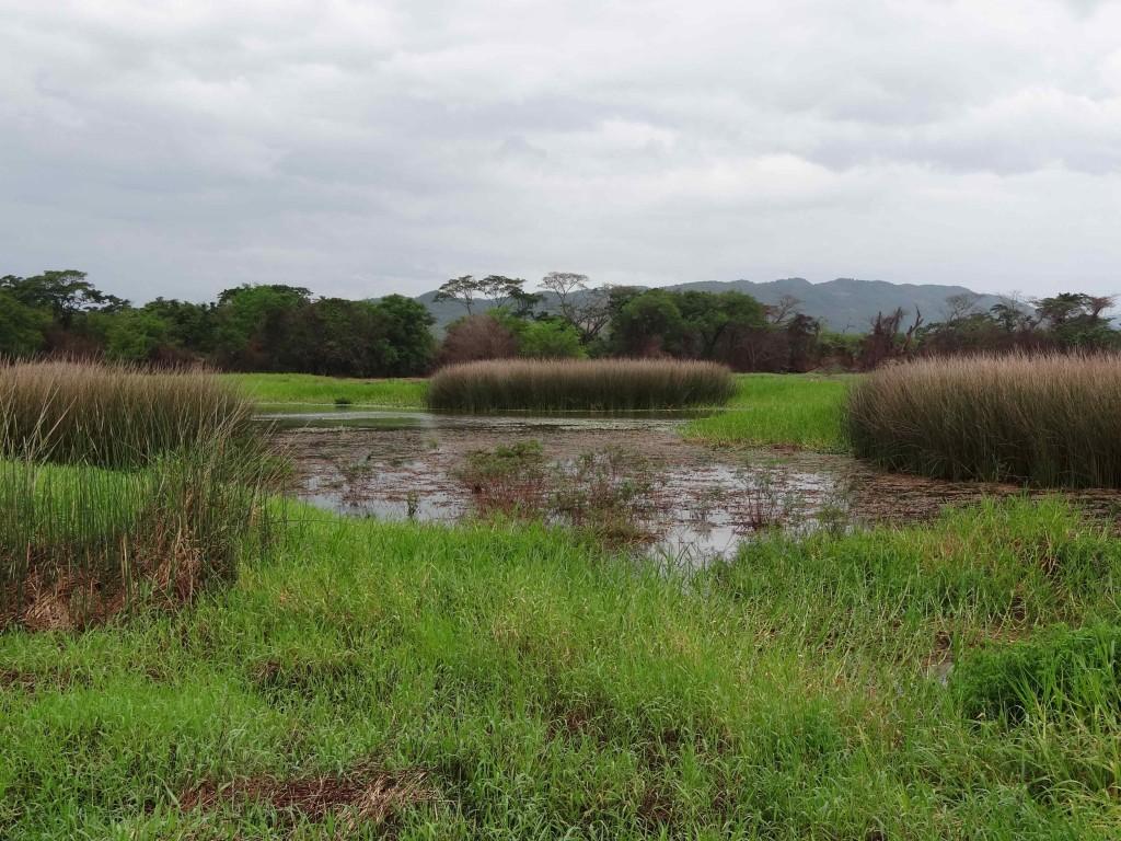 Ponds at Black River Upper Morass