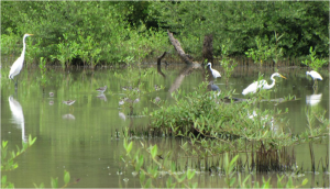 Birds feeding at West Pond, photo by Gregg Moore
