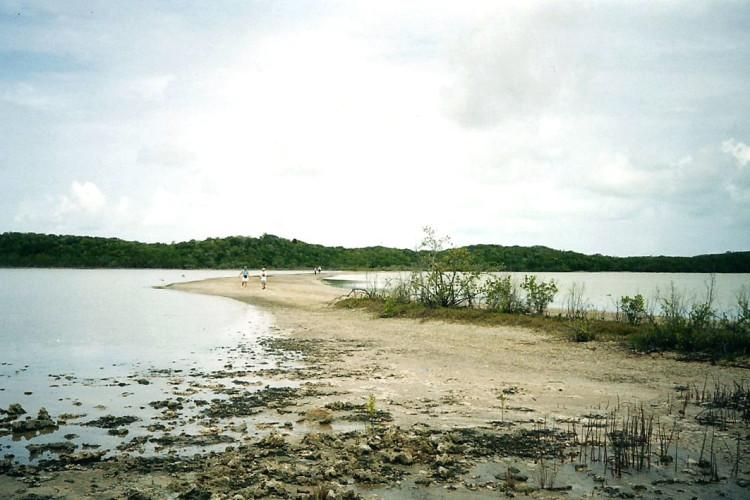 Wetlands on Cat Island (Photo by Carolyn Wardle)