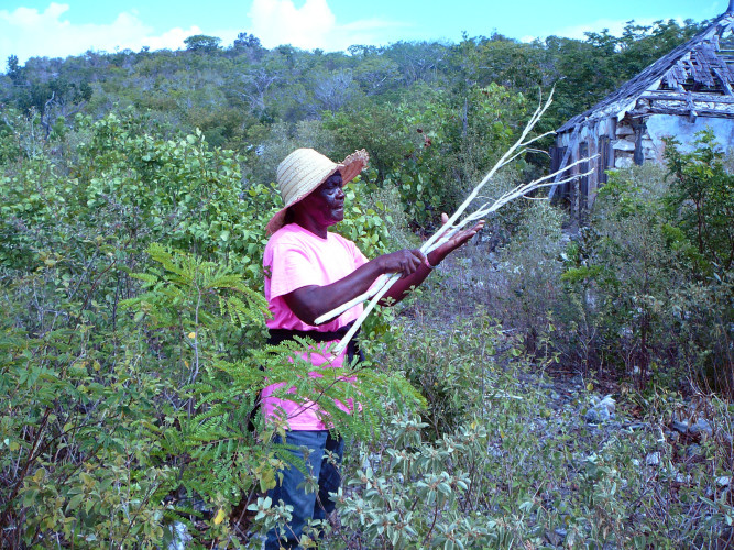 Local Lady Collecting Cascarilla Bark for Campari (Photo by Carolyn Wardle)