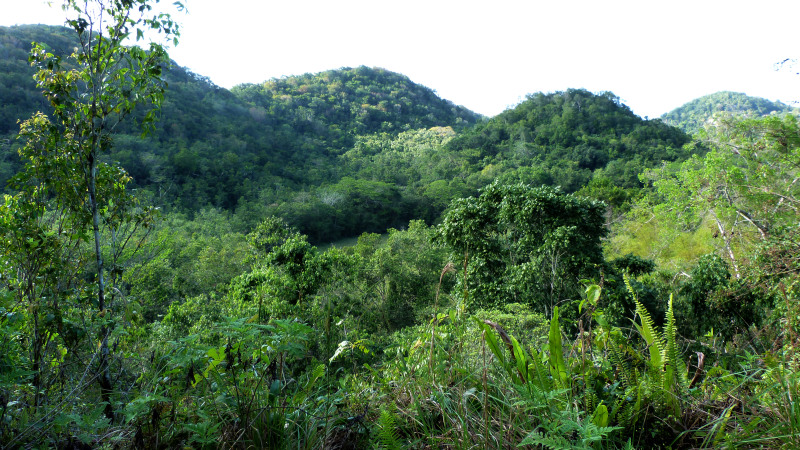 Forested hills surrounding Stewart Town.