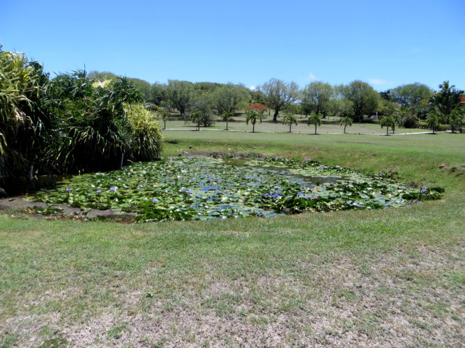 Cotton House Pond (Photo by Aly DeGraff)