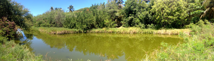 Point Lookout Pond (Photo by Aly DeGraff)