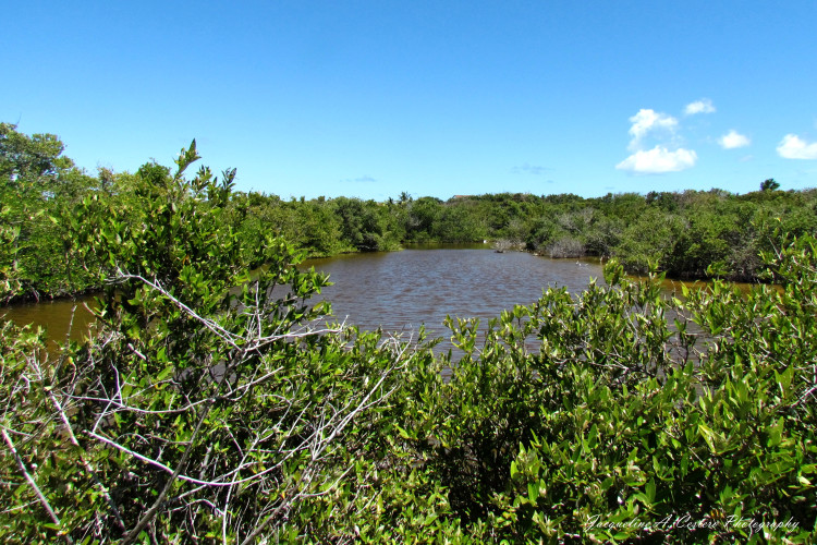 West End By-the-Sea Pond - Anguilla, BWI