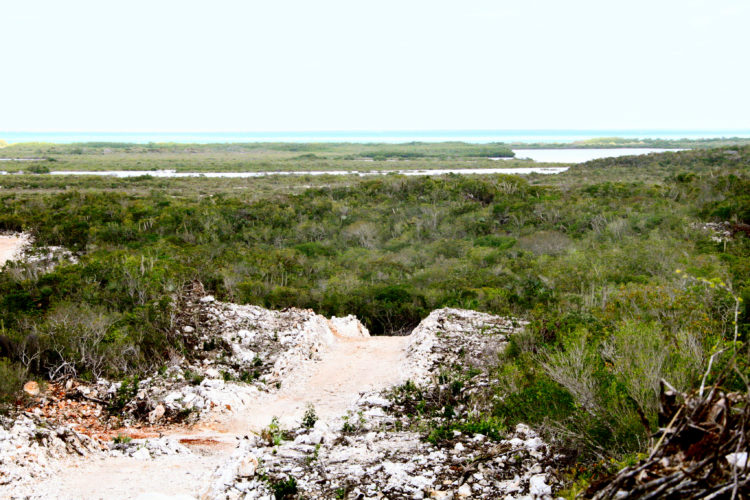 View over tropical dry forest, towards Pigeon Pond Nature Reserve (Photo by Dr. Mike Pienkowski)