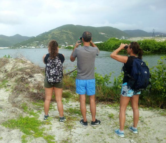 Birding at Great Salt Pond (Photo by Seagrape Tours)