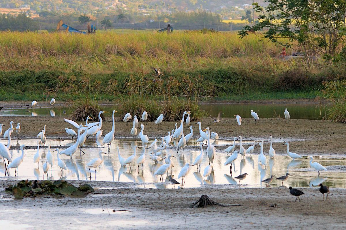 Woodbourne Shorebird Refuge