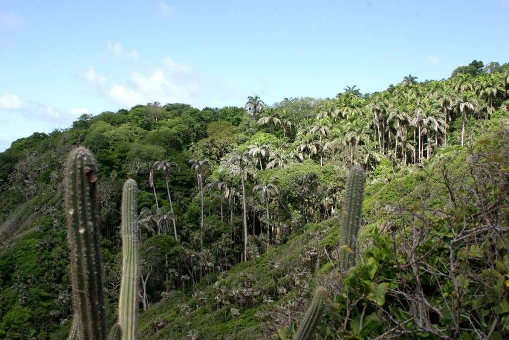 Semi-deciduous Vegetation of Little Tobago