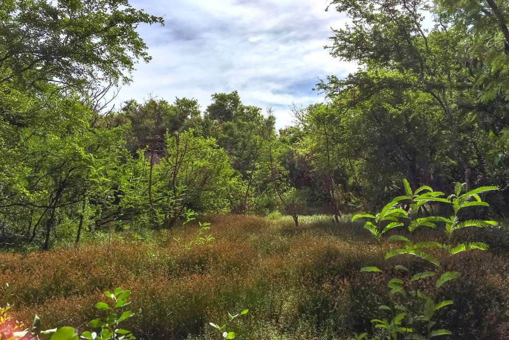Kilgwyn Swamp